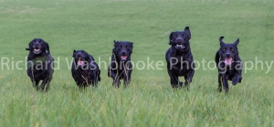 Riverlily Working Dogs  5th September 2014