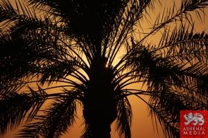 Sunset 6 - 6 Hours of Bahrain at Bahrain International Circuit (BIC) - Sakhir - Kingdom of Bahrain
