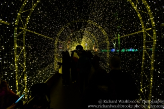 Kew Gardens Light Walk 31st December 2016 Images taken by Richard Washbrooke Photography